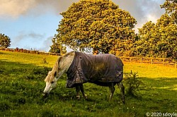 Horse Grazing in Field in Brockholes area.