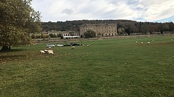 Sheep on Chatsworth Estate An Different View